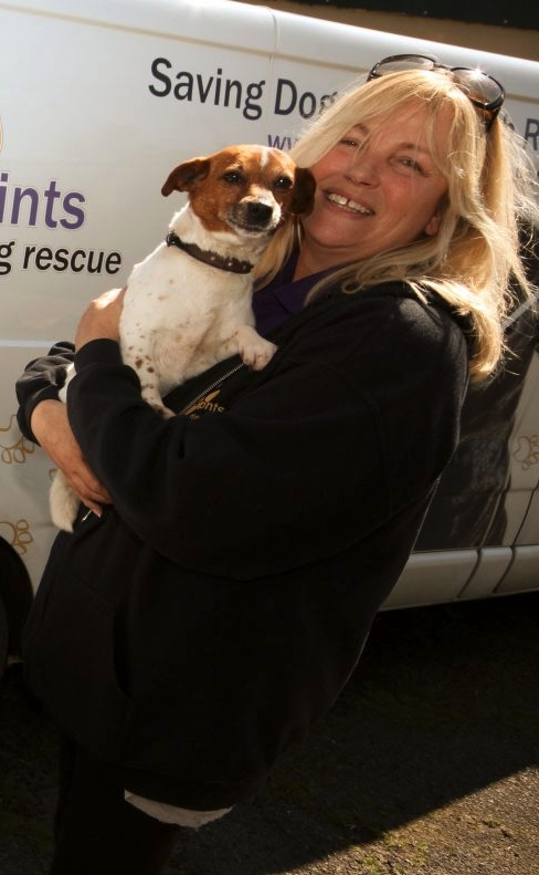 Warwickshire dog rescue centre warns animal charities face closure without  support   The Coventry Observer